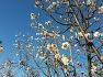 봄 매화꽃