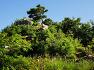 일출과 운해, 조망이 아름다운 세종시 전월산