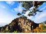 대둔산 소나무