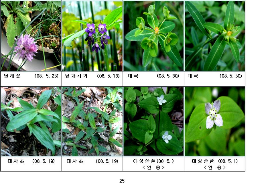 봄에 피는 야생화(5월-7)