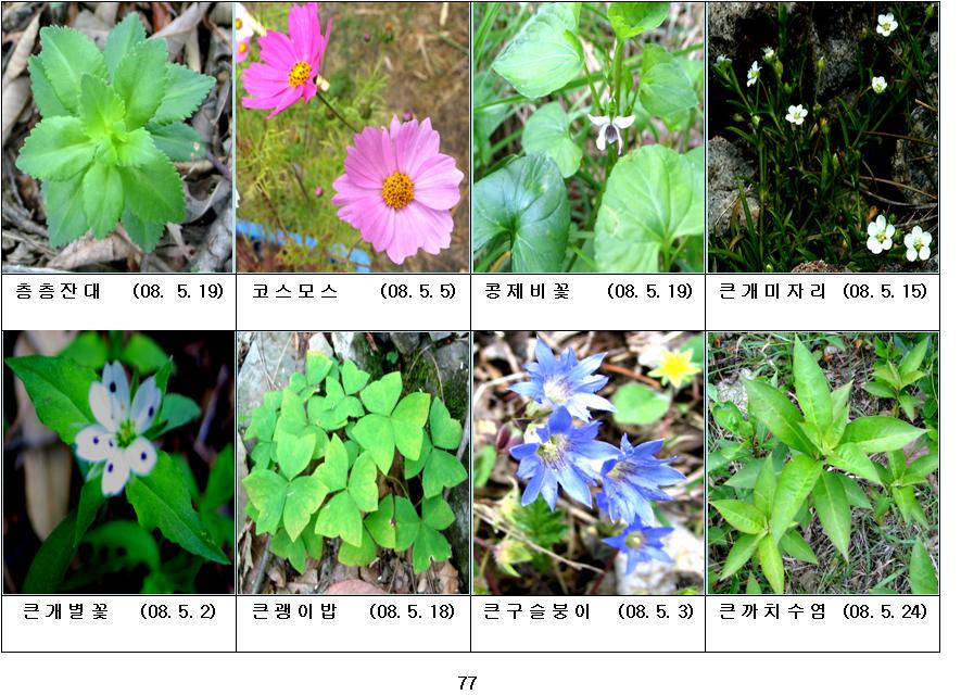 봄에 피는 야생화(5월-20)
