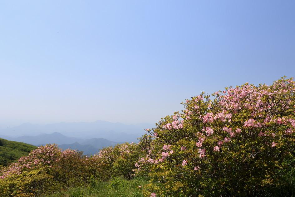 [소백산] 철쭉제가열리고있는 소백산을오르다(0526)